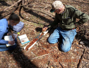 analyzing the soil color of the montpelier forest with munsell soil color charts