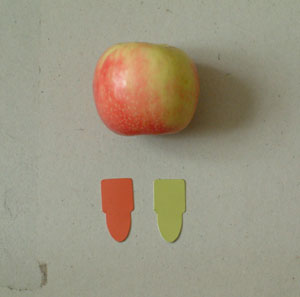 Green and Red Munsell Color swatches against an Apple