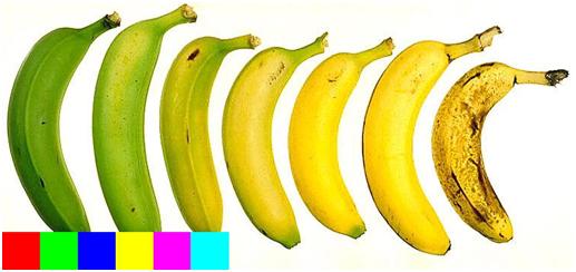 bananas-viewed-by-john