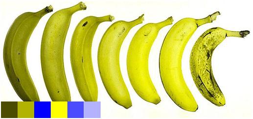 bananas-viewed-by-johns-dog