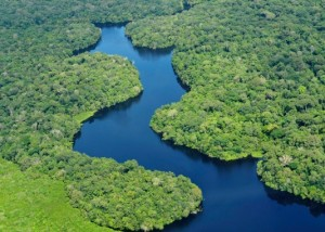 Shades of green in this aerial view of the Amazon Rainforest