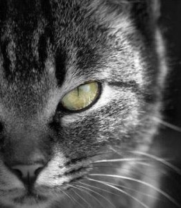 Photo of a cat in black and white except for the eyes in color - an example of the Color CanvasColor phone app