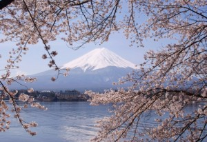Light purple cherry blossoms frame Mt. Fuji, Japan.