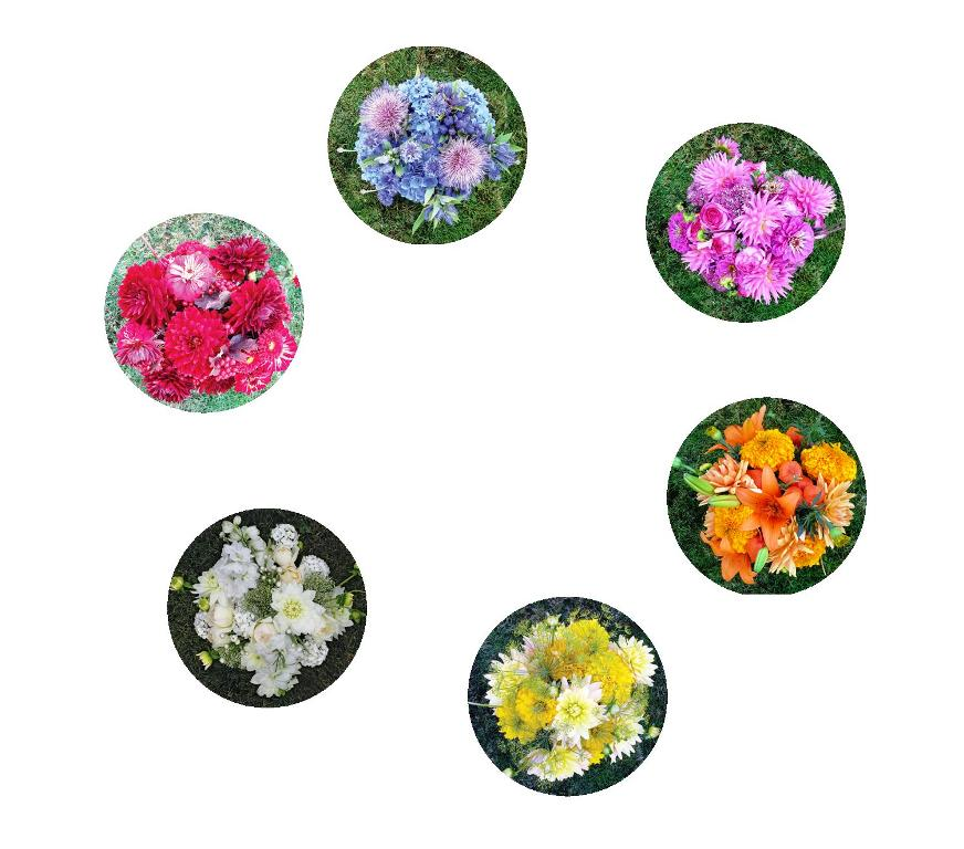 A Floral Color Wheel  Munsell Color System Color Matching From