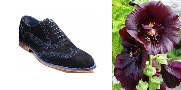 Two images side by side - blue suede shoes and hollyhock flowers