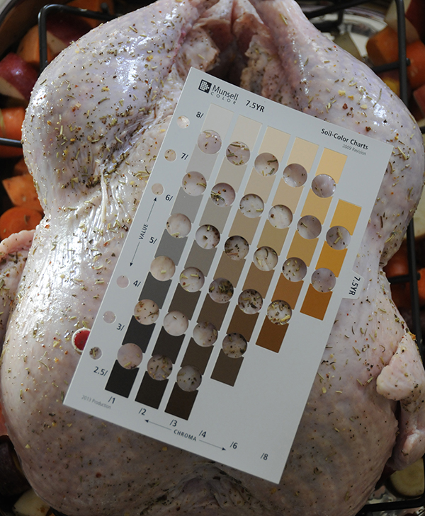 A uncooked turkey showing the skin color on the Munsell soil color chart