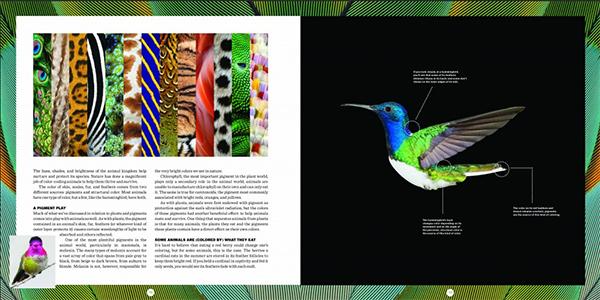 Inside the Secret Language of Color book