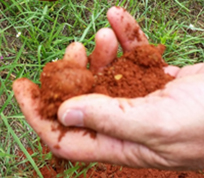 An archaeologist holding a handful of Marsala color soil
