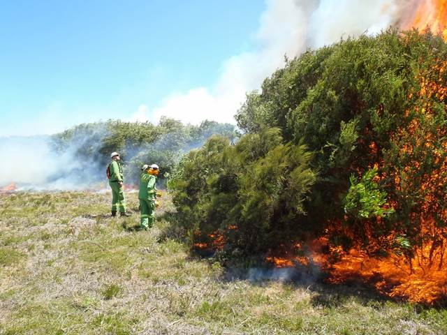 Parks Victoria staff undertaking a burn to manage Coast Tea Tree (Leptospermum laevigatum) at Wilson's Promontory National Park, Victoria, Australia.
