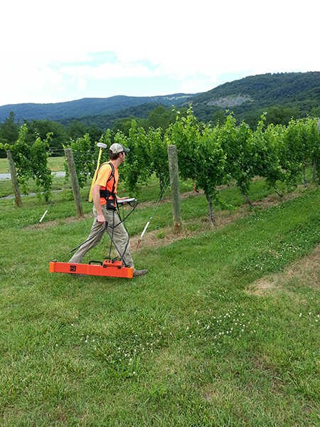 A geologist collecting subsurface soil samples on a vineyard