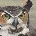 A close-up of a painting by Geologist and Artist Iris Hardy of a great horned owl