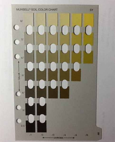 The Munsell 5Y soil color chart showing hues of yellows