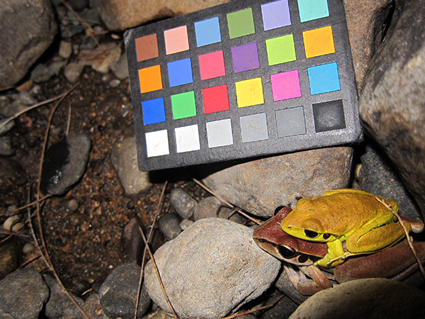 Using a colorchecker chart to determine the changes in skin color in frogs during mating