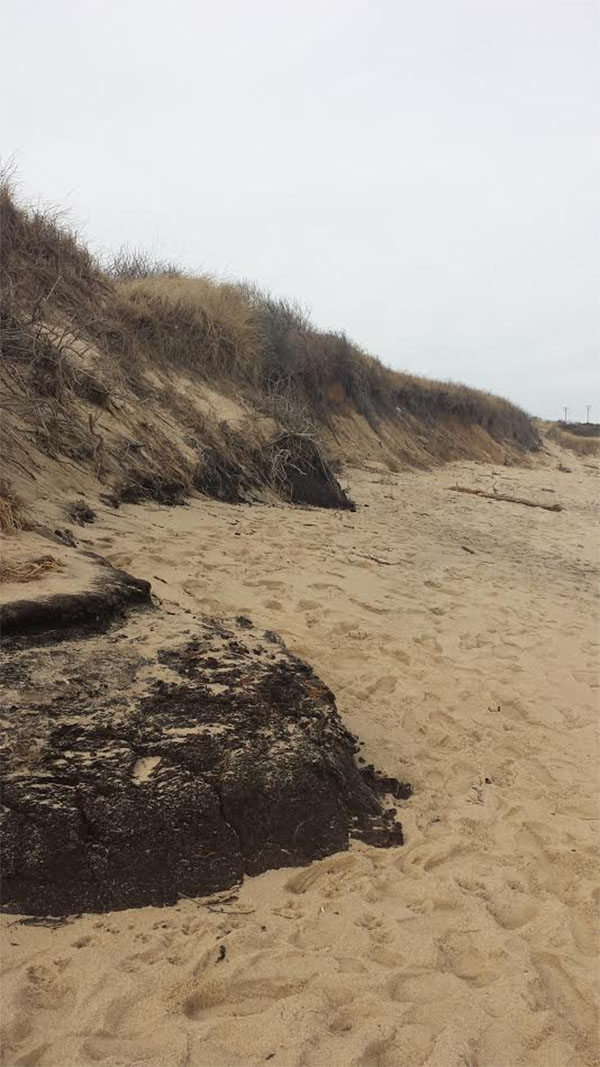 A view of the Cape Cod seashore showing beach erosion