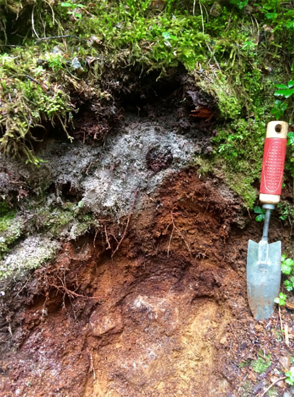 A soil profile of a spodosol near snoqualmie pass in Washington state
