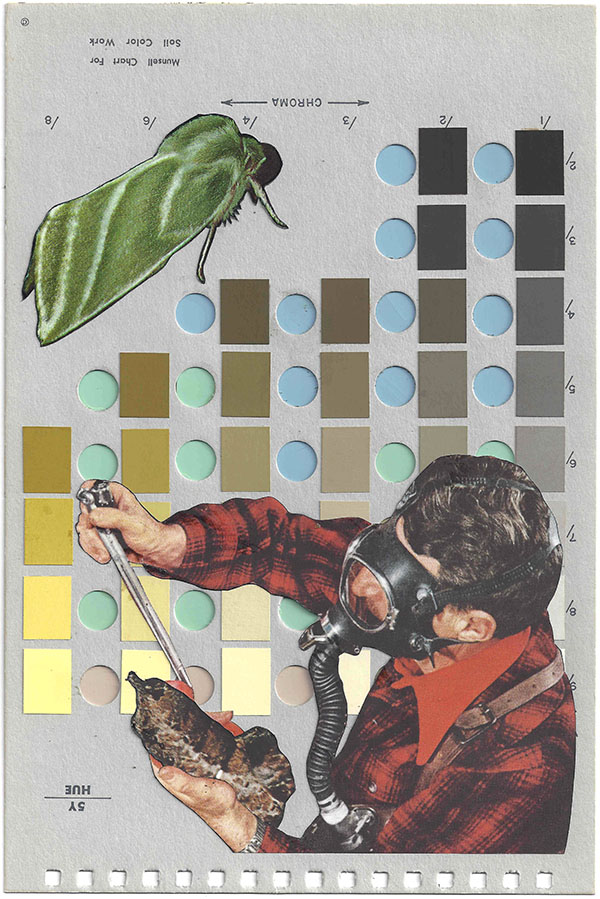 A collage by Chad Yenney featuring a Munsell color chart, a man and bugs