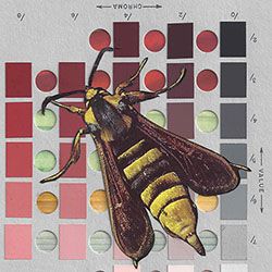 Detail of a collage by Chad Yenney featuring a Munsell soil color chart and a bee