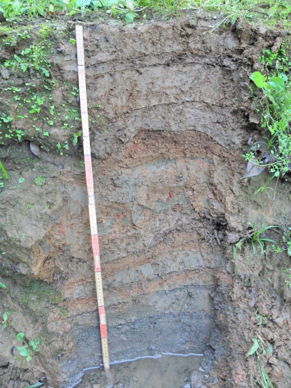 """Neossolo Flúvico"" – Soil profile with different horizons / layers."